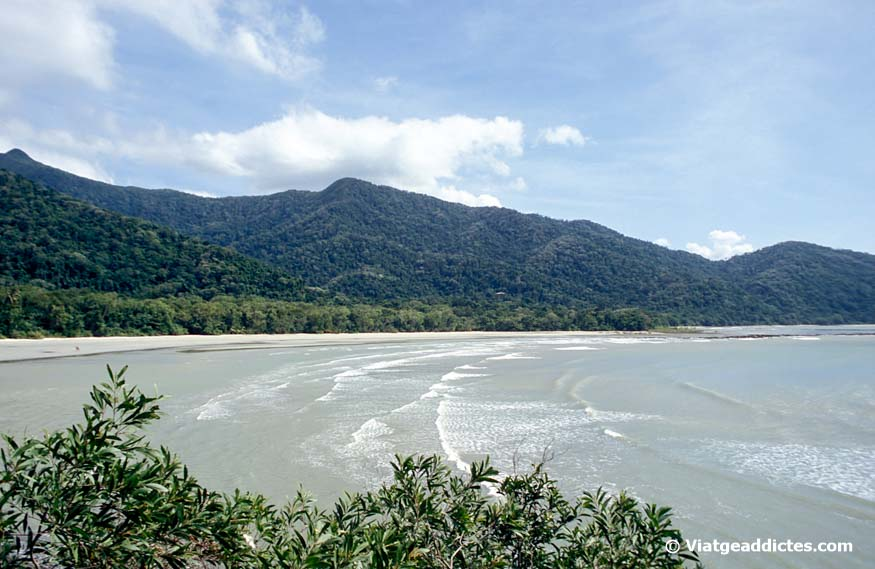 Vistes sobre la platja de Cape Tribulation, des del mirador Cape Tribulation Lookout
