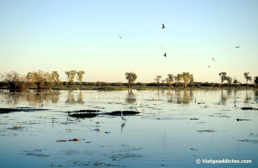 Aves y cocodrilos en Yellow Water Billabong
