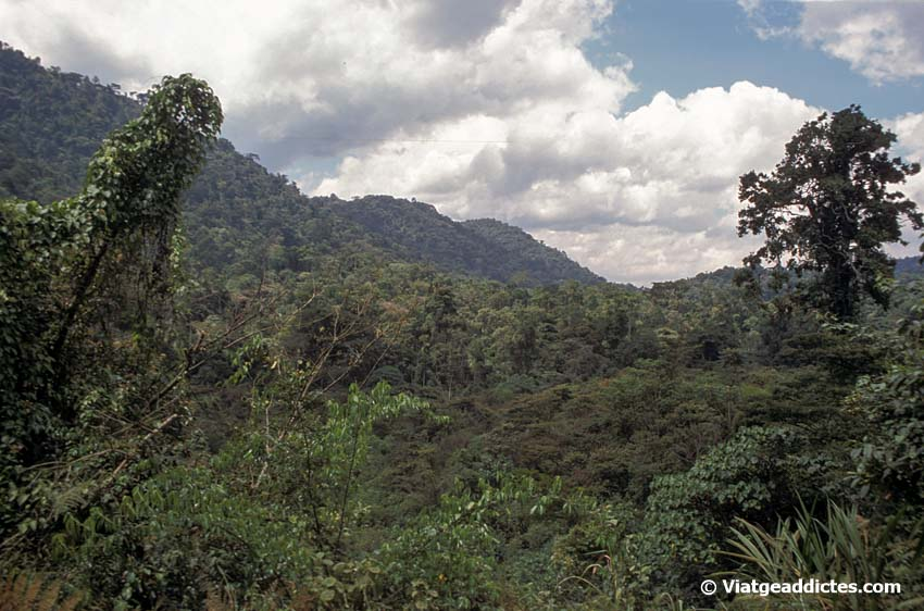 Vista del bosque impenetrable de Bwindi